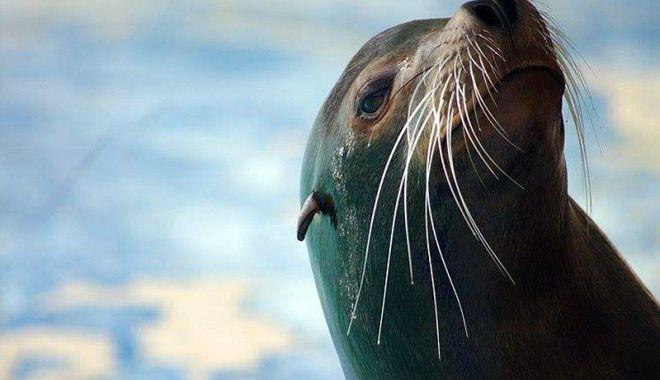 Foto: Trei lei de mare, aduşi la Complexul Muzeal de Ştiinţe ale Naturii