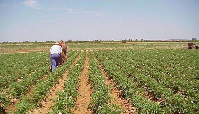 Foto: Condiţii de eligibilitate relaxate, pentru plăţile directe în agricultură
