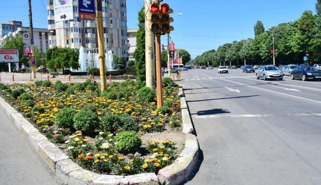 Foto: Primăria Constanţa face inventarul florilor plantate. Ce au descoperit
