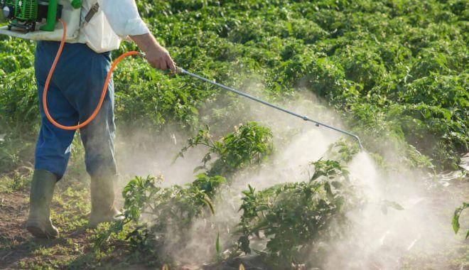 Consumul  de pesticide din agricultura mondială este  în creștere - consumuldepesticidedinagricultur-1603992300.jpg