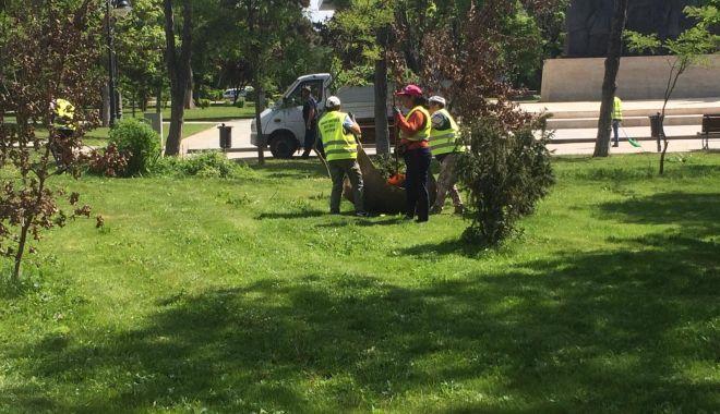 Foto: Administrația locală continuă lucrările de igienizare în Constanţa