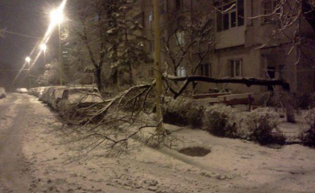 Foto: COD portocaliu/V�ntul a d�r�mat copaci, st�lpi �i cabluri de electricitate