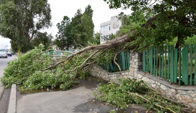 Vine furtuna! Primăria Constanţa face apel să nu lăsaţi maşinile sub pomi sau în dreptul gurilor de canalizare - copacicazutifurtuna30-1501155420.jpg