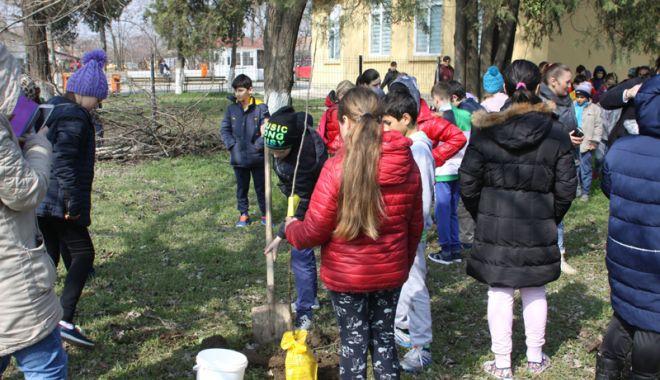 Foto: Livadă de pomi fructiferi, plantată  de voluntarii cora City Park, alături de elevi