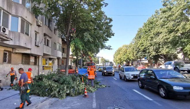Foto: Coroanele arborilor de-a lungul străzii, toaletate pentru a nu încurca circulația rutieră