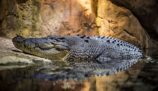 Foto: Aproape 300 de crocodili masacraţi, după ce  un om a fost ucis