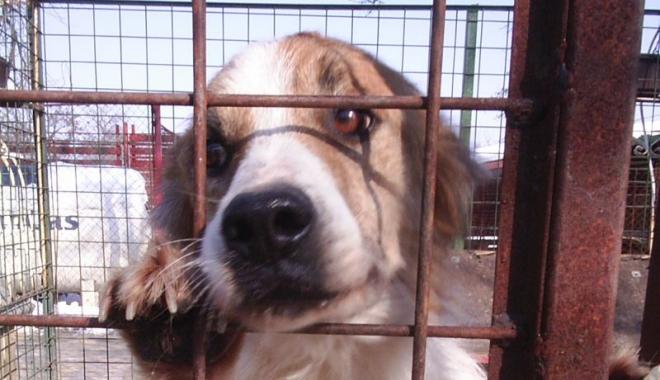 Foto: Cruzime  la adăpostul  de animale? Poliţia  a deschis o anchetă