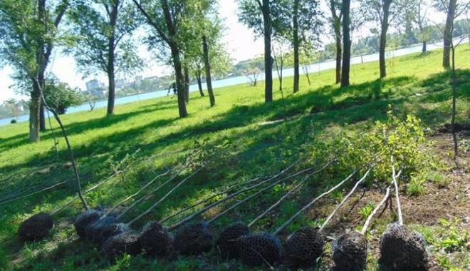 """Foto: """"Curăţăm Constanţa noastră"""". Sute de copaci plantaţi de elevi şi voluntari, în Parcul Tăbăcărie"""