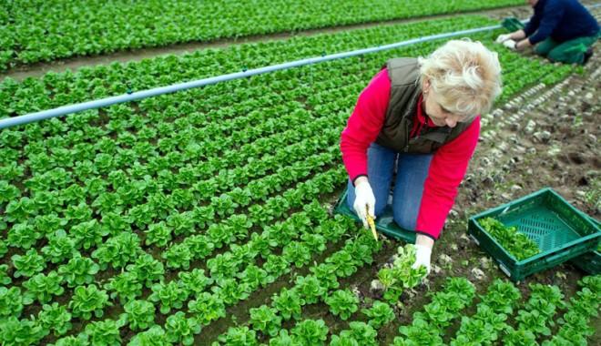 Foto: Curs de agricultură ecologică,  organizat de CCINA la Constanţa
