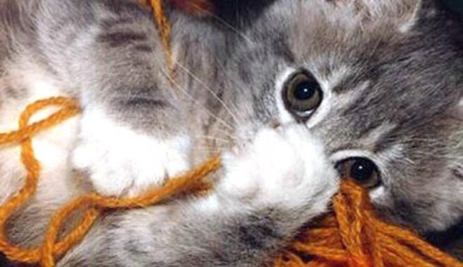 Foto: Mutarea într-o casă nouă înnebuneşte pisicile