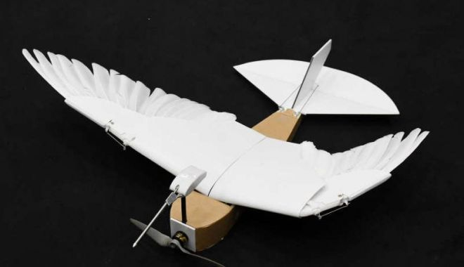 Foto: Drona-porumbel cu pene reale, noua invenție a cercetătorilor din California