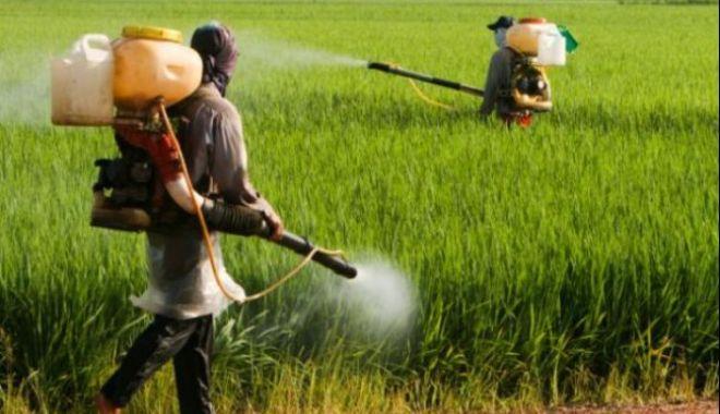 Comisia Europeană avertizează România: INTERZIS la autorizații pentru pesticide! - ddd-1580736049.jpg
