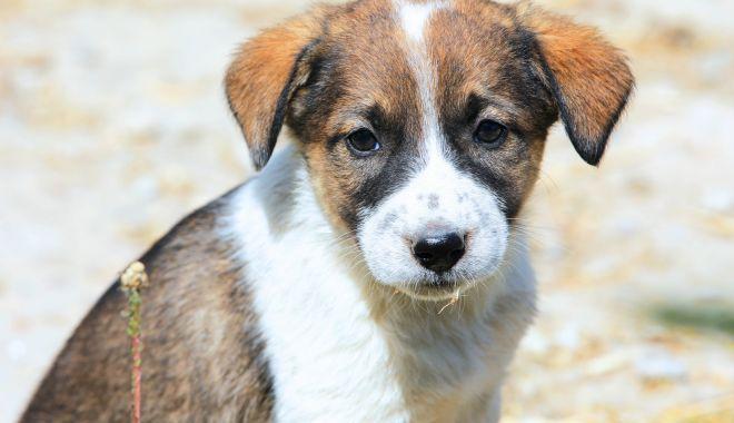 De astăzi nu se mai capturează câinii fără stăpân, la Constanţa - deastazi-1606378950.jpg