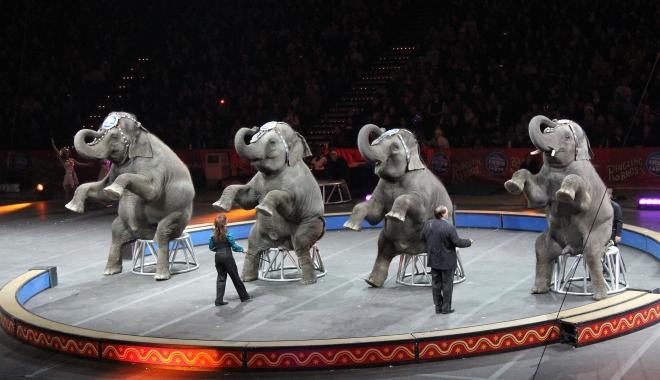 Foto: E oficial! Fără animale sălbatice la circ, în România!