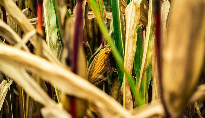 Foto: Declararea stării de calamitate pune în pericol producţia următorilor ani agricoli