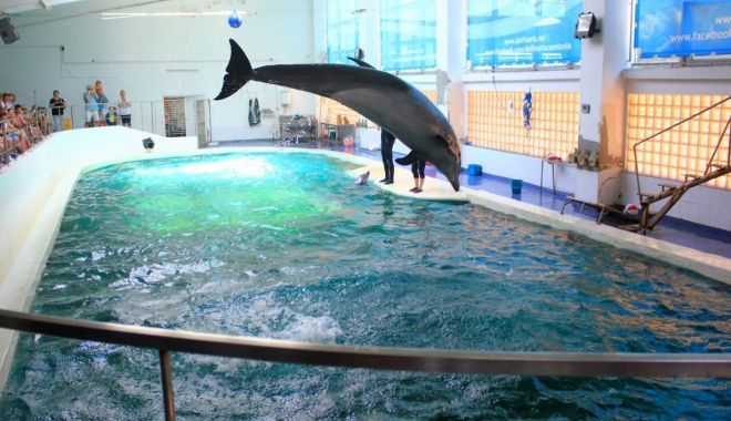 Foto: Delfinariul, Microrezervația și Acvariul sunt deschise pentru vizitatori