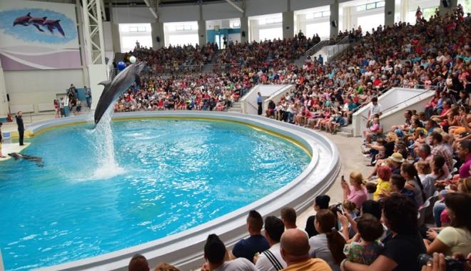 """Foto: Delfinariul vrea să facă afaceri cu delfinul alb Beluga. """"Dacă am putea vinde un pui pe an, cu un milion de euro, ar fi genial"""""""