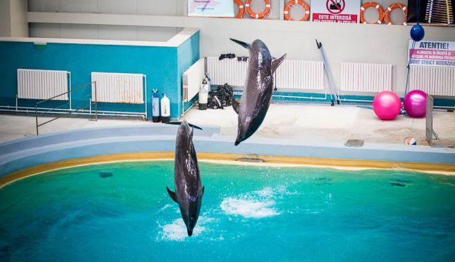 Delfinariul Constanţa va fi extins şi vom avea un nou acvariu - delfinariu2-1552597595.jpg