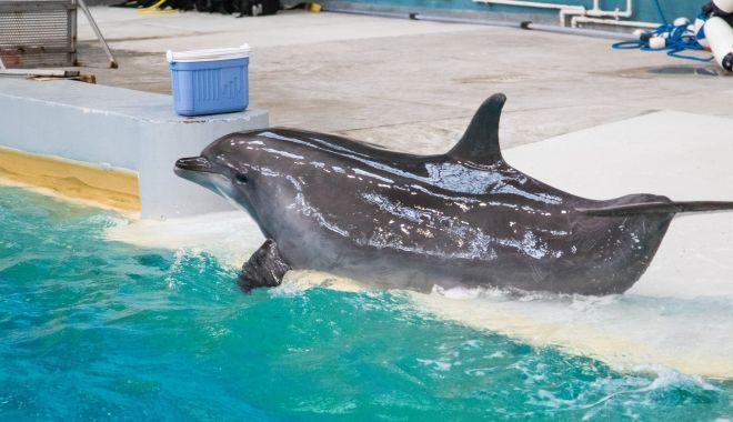 Delfinariul Constanţa va fi extins şi vom avea un nou acvariu - delfinariu4-1552597681.jpg