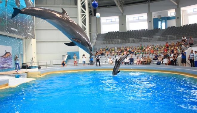 Foto: Spectacolele cu delfini revin în atenţia turiştilor