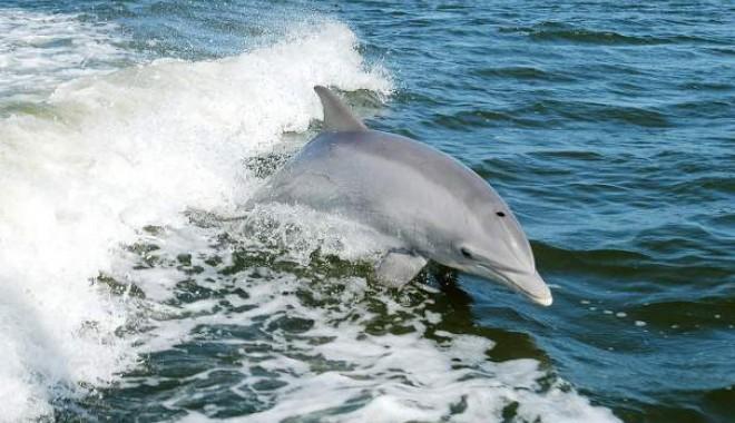 delfini maidanezi in dambovita stiri
