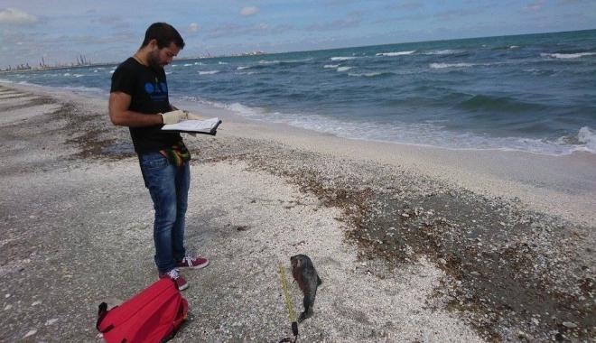 Foto: Alertă la malul mării! Şase delfini găsiţi morţi pe plaja de la Hanul Piraţilor