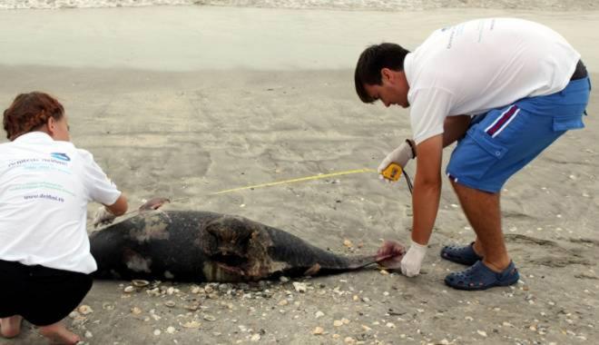 Foto: Situaţie îngrijorătoare: primul caz de eşuare în masă a delfinilor, pe litoral