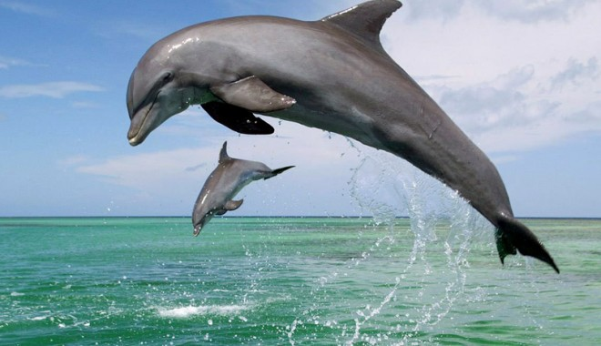 Foto: Expediţii nautice pentru turişti, alături de delfinii din Marea Neagră