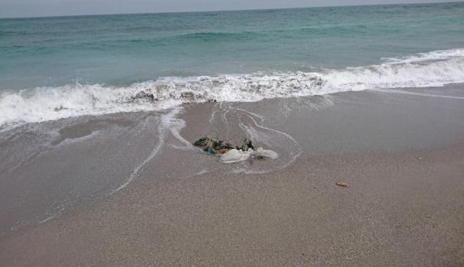 Foto: Delfini eşuaţi la Marea Neagră. Au murit din cauza plaselor pescarilor