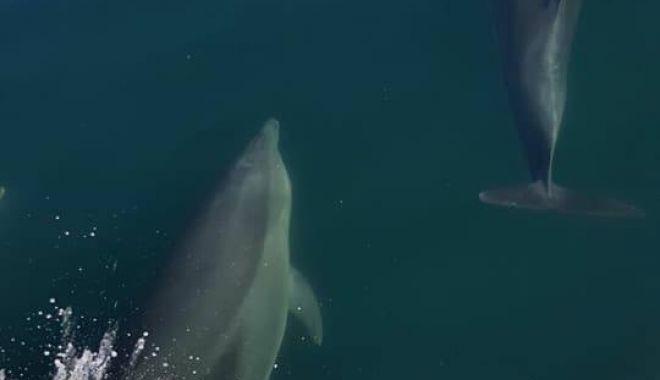 Foto: IMAGINI DRAMATICE / Delfini eşuaţi şi morţi pe plajă