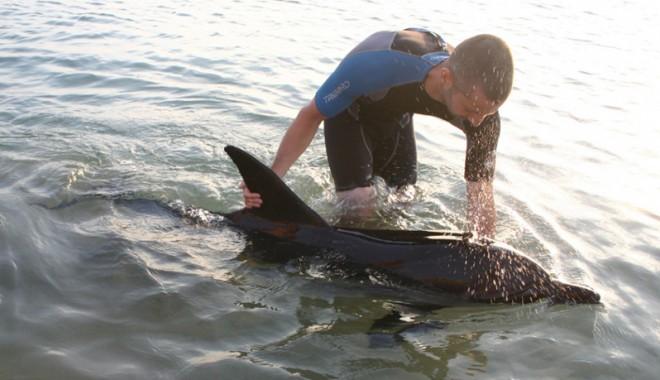 Foto: Pachete turistice cu ieşiri pe mare şi întâlniri cu pescarii pentru protejarea delfinilor