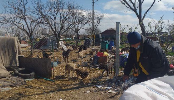 GALERIE FOTO / VIDEO. Descindere la un adăpost de câini din judeţul Constanţa. Animale, găsite în stare gravă - descindere2-1618476878.jpg