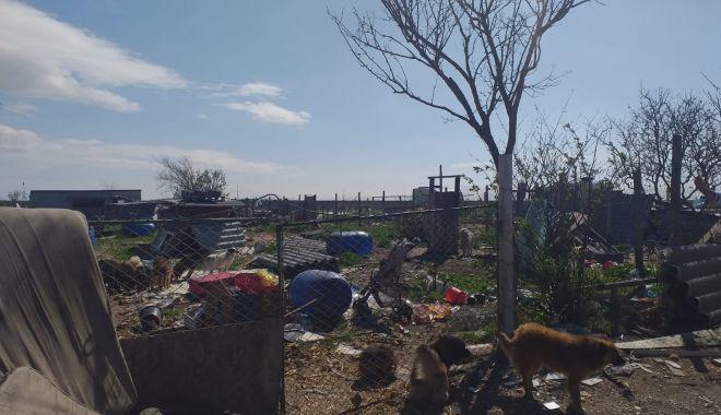 GALERIE FOTO / VIDEO. Descindere la un adăpost de câini din judeţul Constanţa. Animale, găsite în stare gravă - descindere4-1618476902.jpg