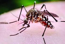 Foto: ALERTĂ! Cinci decese din cauza virusului West Nile