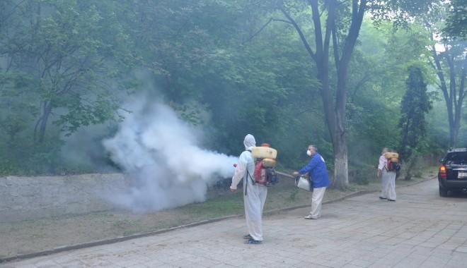 Foto: Administraţia locală din Cernavodă a început acţiunea de dezinsecţie împotriva ţânţarilor