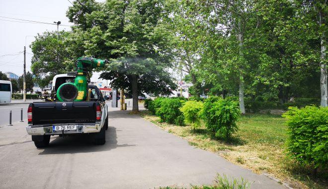 Foto: Acţiunile de dezinsecție continuă în toate zonele Constanţei