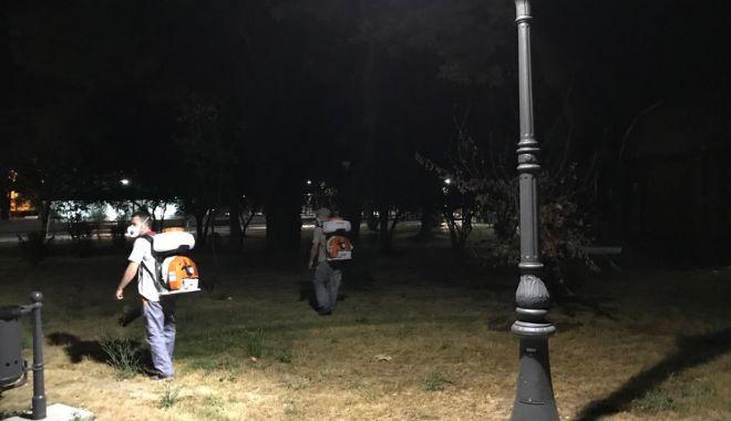 Foto: Continuă dezinsecția în municipiul Constanța!