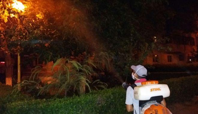 Foto: Administrația locală  a început dezinsecția în Constanța