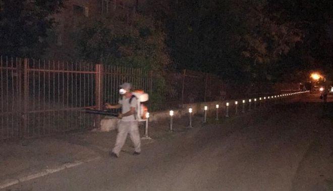 Foto: Constanţa continuă lupta cu insectele!