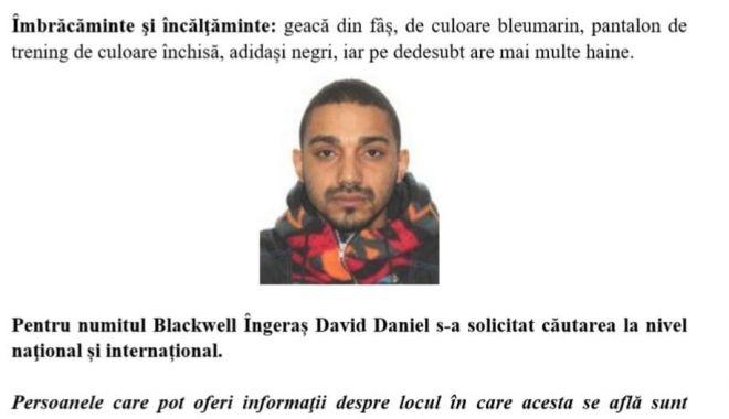 Foto: A dispărut Blackwell Îngeraş. Dacă l-aţi văzut, anunţaţi imediat Poliţia!