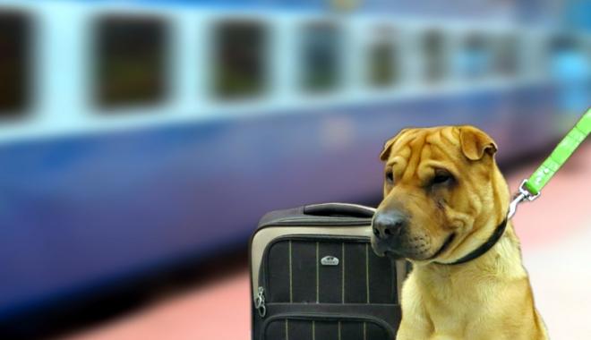 Foto: În ce condiţii pot fi plimbaţi câinii cu trenul