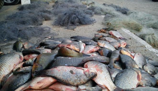 Foto: Prinși cu peștele-n mașină, s-au ales cu dosare penale