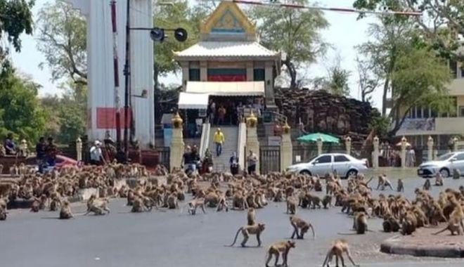 Două bande rivale de maimuţe s-au bătut într-o intersecţie din Thailanda - douabande2-1627648598.jpg
