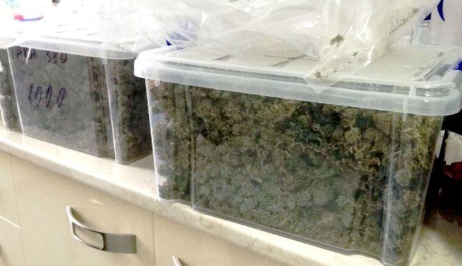 Foto: Prinse în flagrant în timp ce vindeau 5 kilograme de cannabis