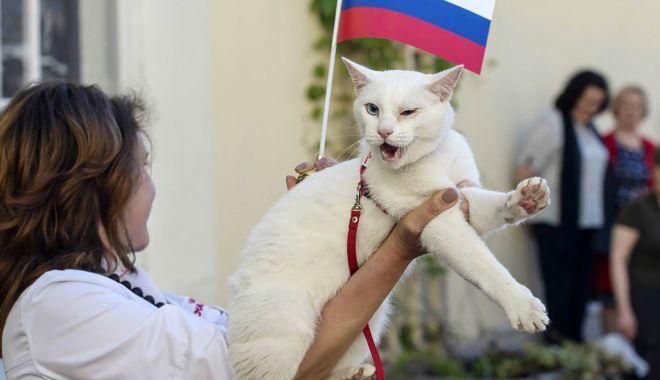 Foto: Campionatul Mondial de Fotbal 2018. Pisica oracol Achile a prezis învingătoarea dintre Franţa şi Belgia