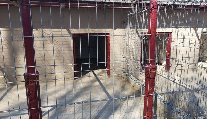 Foto: Galerie foto. Iată cum arată noul adăpost pentru câini fără stăpân, din Constanța