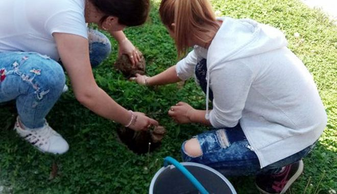 Foto: Elevii din judeţul Constanţa, cei mai buni din ţară la amenajarea de spaţii verzi