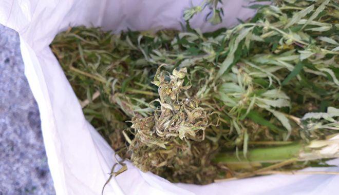 """Foto: E plin de droguri în Vama Veche! Încă trei tineri, prinşi cu """"iarbă"""" de vânzare"""