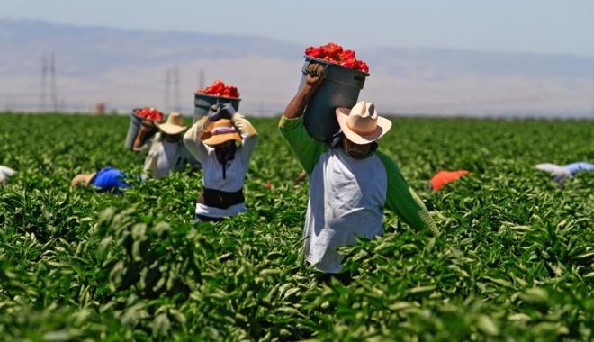 Foto: Oferte de muncă tot mai sărace prin reţeaua EURES