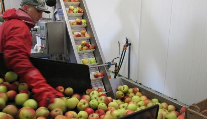 Foto: Spaniolii caută muncitori pentru ambalat fructe şi verdeţuri